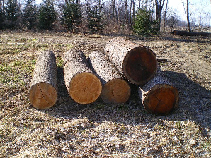 A whack of very nice Cherry logs waiting for the veneer buyer or possibly the sawmill.