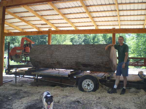 38 inch diameter Tulip log ready for the sawmill